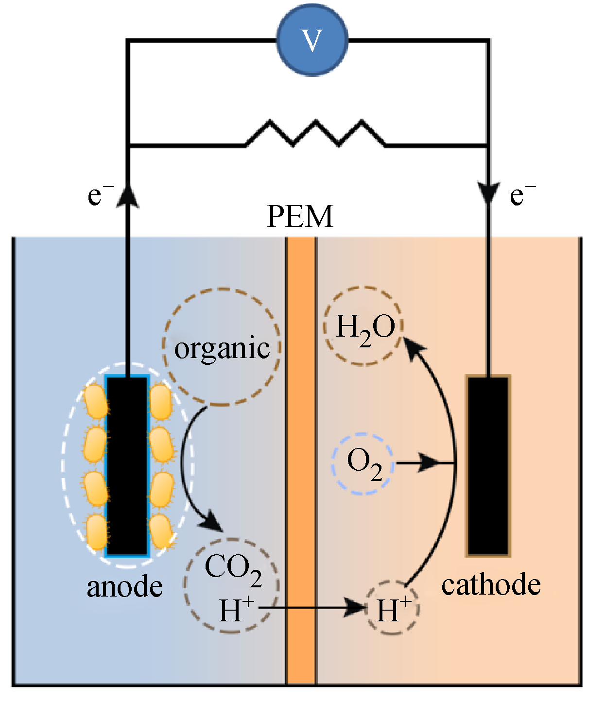 Microbial fuel cell with high content solid wastes as substrates: a