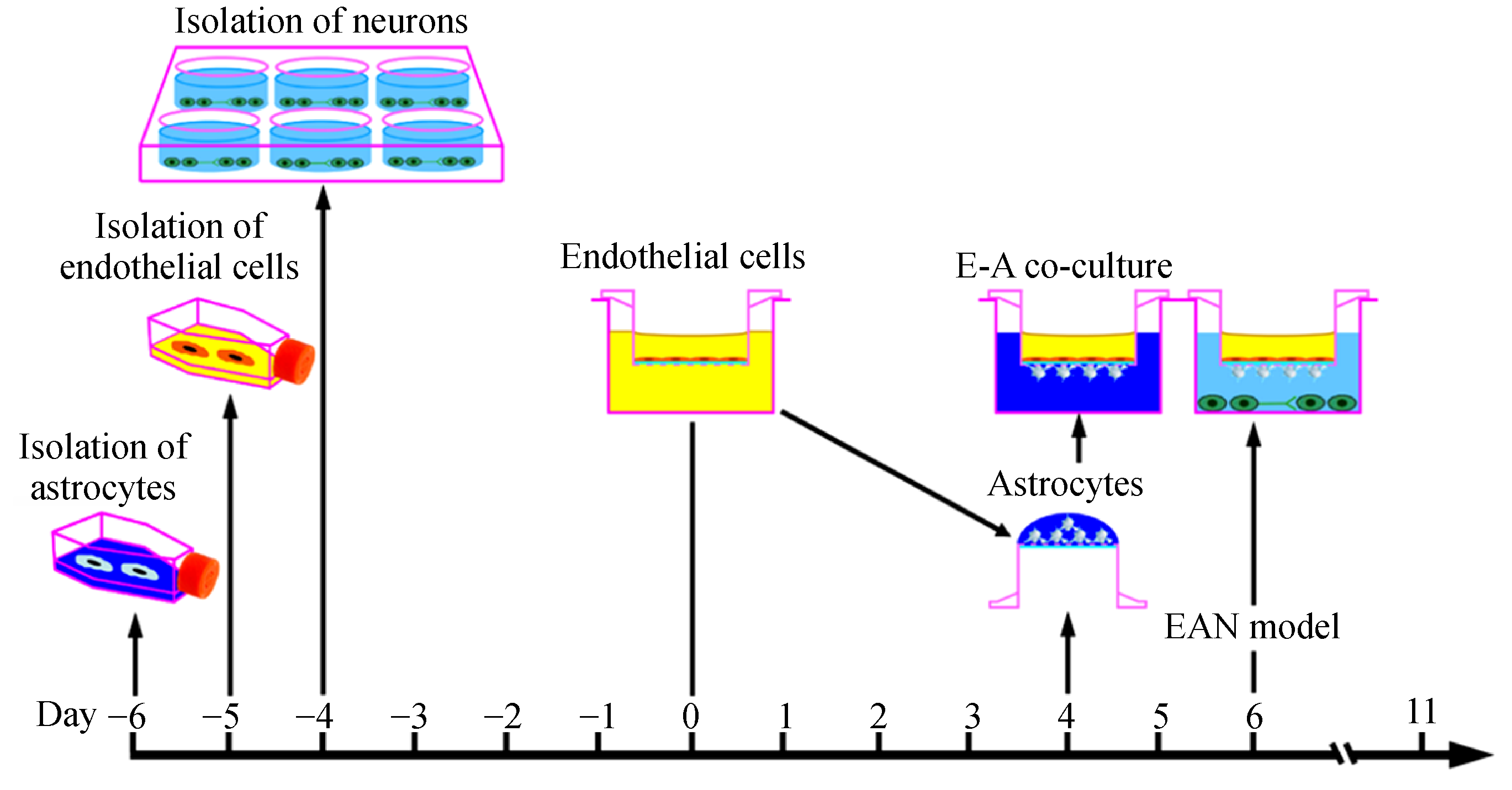 Neuroprotective effects of <i>Ginkgo biloba</i> extract and ...