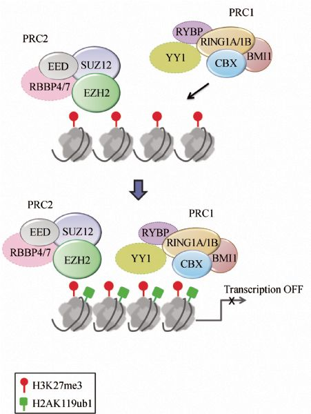 Epigenetic Dysregulation In Hepatocellular Carcinoma