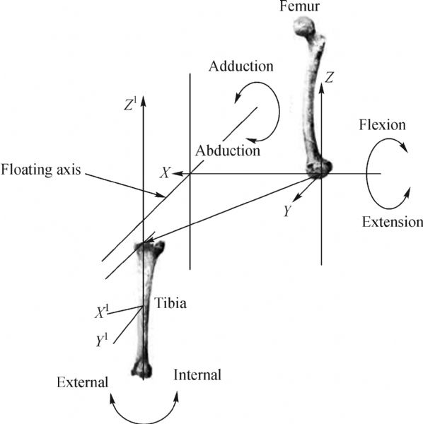 Biomechanics of knee joint a review viewdownloadnew ccuart Images